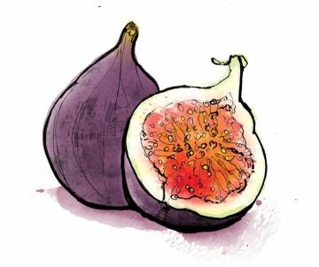 food illustration 4